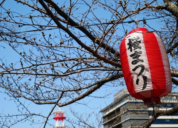 桜まつり準備完了  2021-03-15 00:00_b0093754_23185331.jpg
