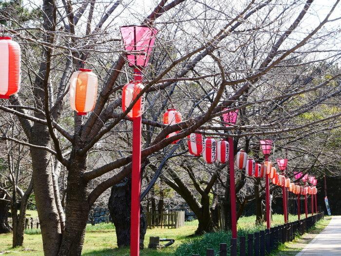 桜まつり準備完了  2021-03-15 00:00_b0093754_23193030.jpg