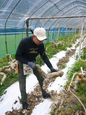 甘熟イチジク 匠の剪定作業2021 前編:果実を実らせる剪定と果樹を若返らせるための仕立て剪定と誘引_a0254656_17335942.jpg
