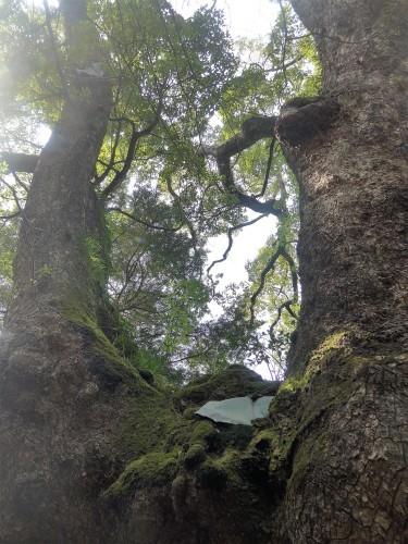 熱海「来宮神社 五色の杜」へ行く。_f0232060_23310978.jpg
