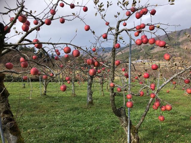 奇跡のリンゴの木村秋則さんの愛弟子佐々木悦雄さんのリンゴジュースを飲んでみませんか!_a0053480_13461984.jpg