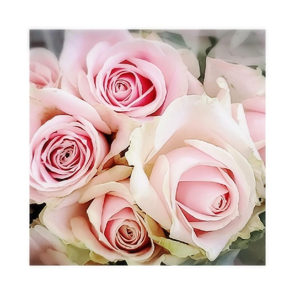 薔薇_b0211088_11050549.jpg