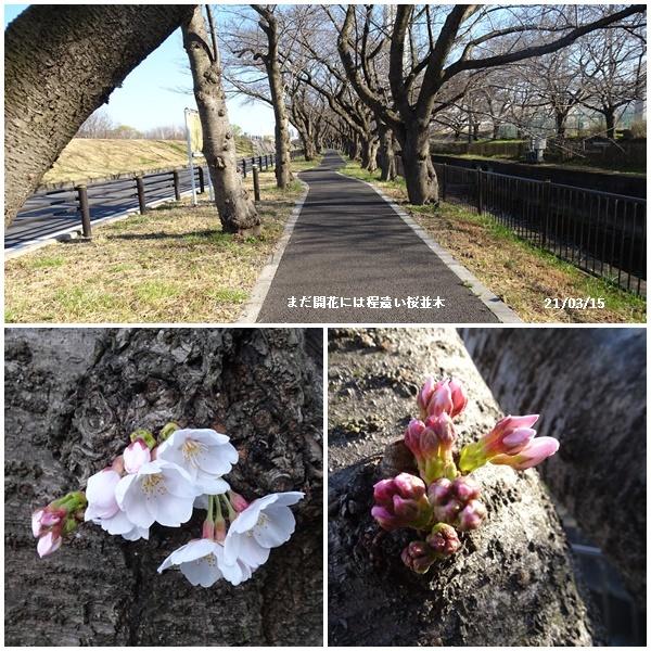 桜散歩、婿さんの帰国_c0051105_18082037.jpg