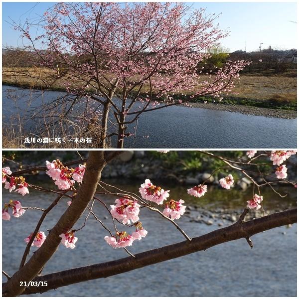 桜散歩、婿さんの帰国_c0051105_21141050.jpg