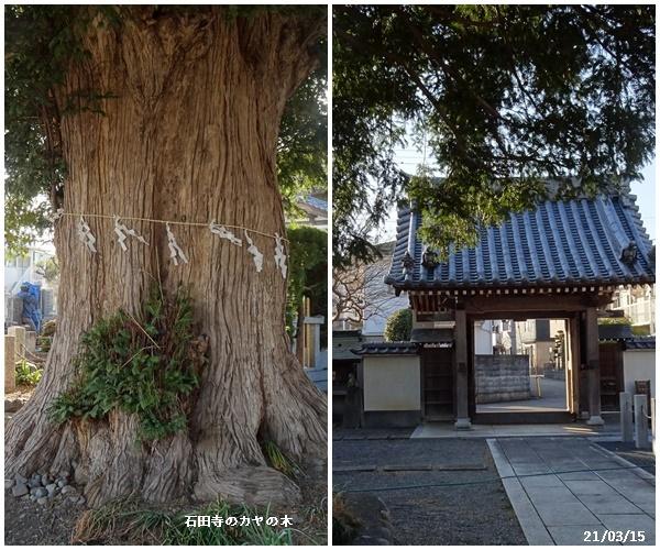 桜散歩、婿さんの帰国_c0051105_21223834.jpg