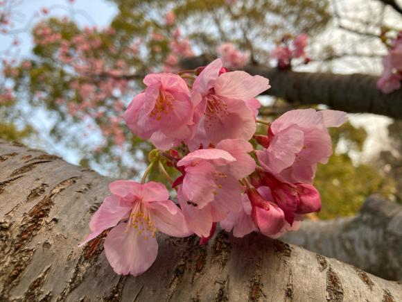 八幡屋公園の花達_a0098418_23450351.jpg