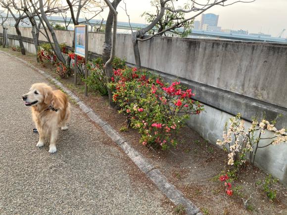 八幡屋公園の花達_a0098418_23460123.jpg