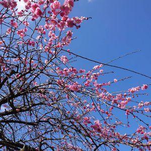 梅の花_a0077632_12254452.jpg