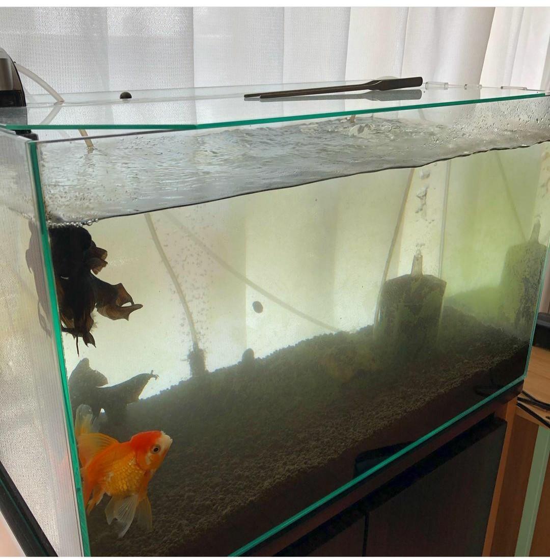 金魚と本日のグラスワイン_f0221137_17413630.jpg