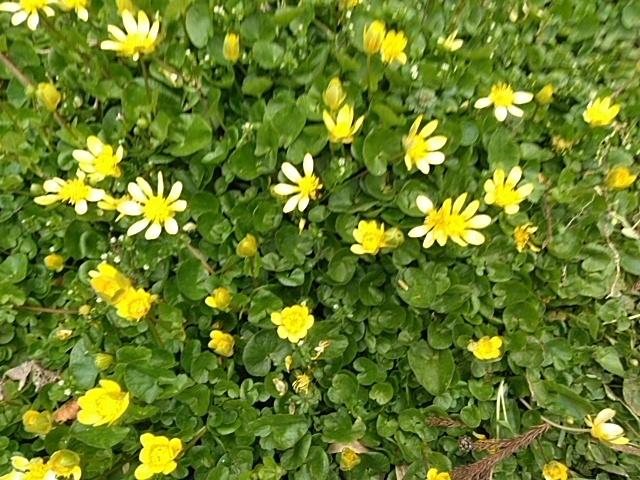 園内も春がいっぱいです~💕_c0280108_23215589.jpg