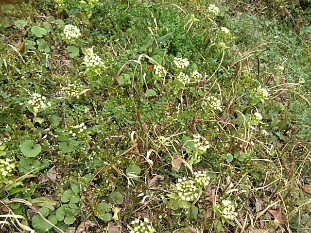 園内も春がいっぱいです~💕_c0280108_23230270.jpg
