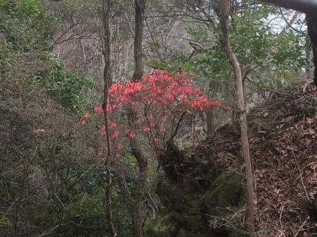 観音山&ごろごろ岳_c0218841_21261411.jpg
