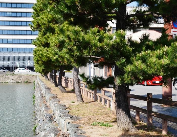 和歌山便り  2021-03-17 00:00 _b0093754_20455254.jpg