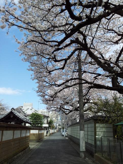 2012/3【春のフォトグラフ】花が咲いたら日記~目黒古桜と目黒川下流のソメイヨシノ_b0116271_15232732.jpg