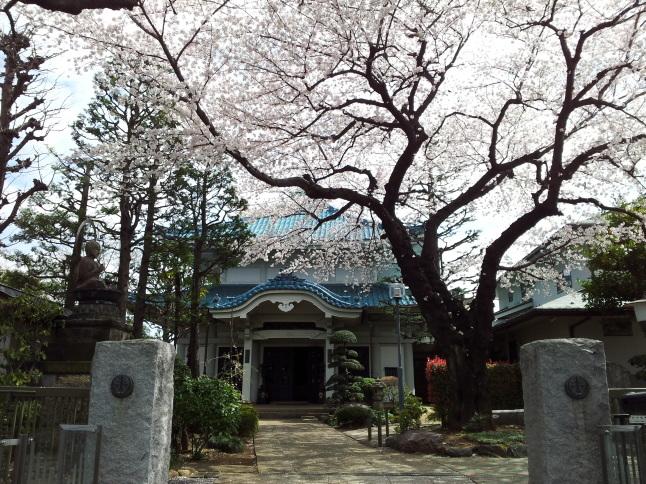 2012/3【春のフォトグラフ】花が咲いたら日記~目黒古桜と目黒川下流のソメイヨシノ_b0116271_15232815.jpg