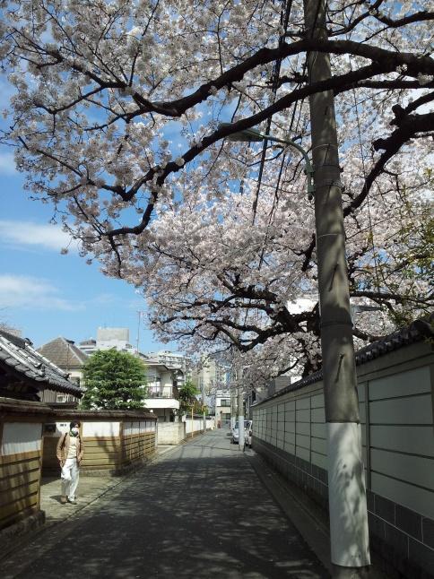 2012/3【春のフォトグラフ】花が咲いたら日記~目黒古桜と目黒川下流のソメイヨシノ_b0116271_15260605.jpg