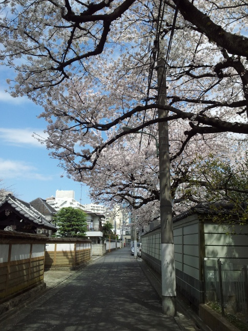 2012/3【春のフォトグラフ】花が咲いたら日記~目黒古桜と目黒川下流のソメイヨシノ_b0116271_15260748.jpg