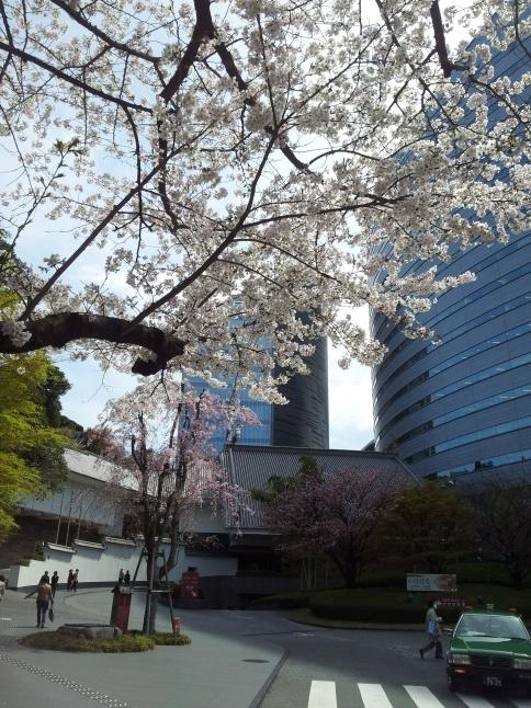 2012/3【春のフォトグラフ】花が咲いたら日記~目黒古桜と目黒川下流のソメイヨシノ_b0116271_15281721.jpg