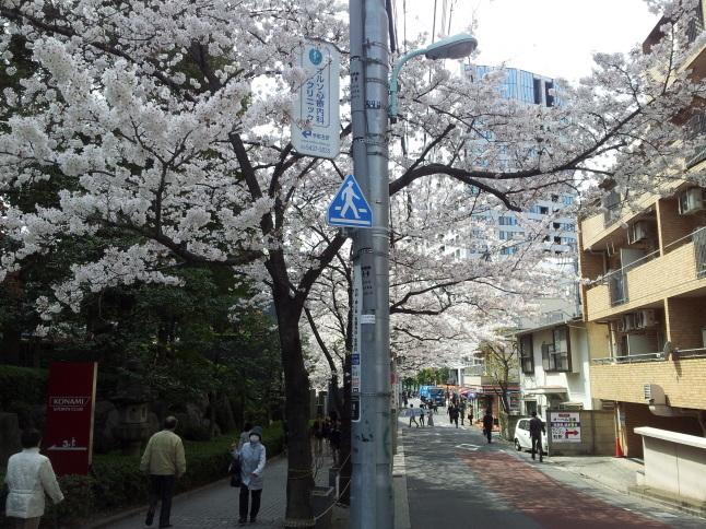 2012/3【春のフォトグラフ】花が咲いたら日記~目黒古桜と目黒川下流のソメイヨシノ_b0116271_15312338.jpg