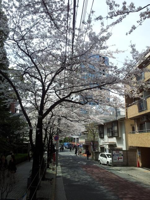 2012/3【春のフォトグラフ】花が咲いたら日記~目黒古桜と目黒川下流のソメイヨシノ_b0116271_15312453.jpg