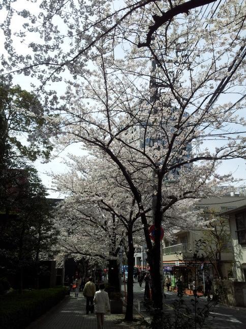 2012/3【春のフォトグラフ】花が咲いたら日記~目黒古桜と目黒川下流のソメイヨシノ_b0116271_15312594.jpg