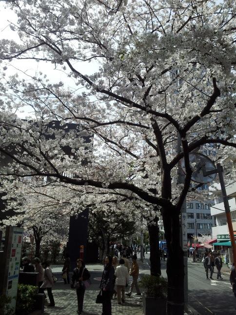 2012/3【春のフォトグラフ】花が咲いたら日記~目黒古桜と目黒川下流のソメイヨシノ_b0116271_15312630.jpg