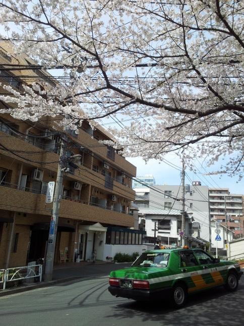 2012/3【春のフォトグラフ】花が咲いたら日記~目黒古桜と目黒川下流のソメイヨシノ_b0116271_15312667.jpg