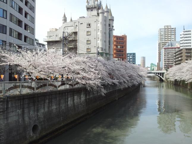 2012/3【春のフォトグラフ】花が咲いたら日記~目黒古桜と目黒川下流のソメイヨシノ_b0116271_15330853.jpg