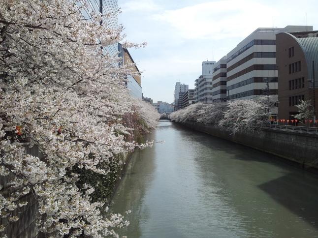 2012/3【春のフォトグラフ】花が咲いたら日記~目黒古桜と目黒川下流のソメイヨシノ_b0116271_15335781.jpg