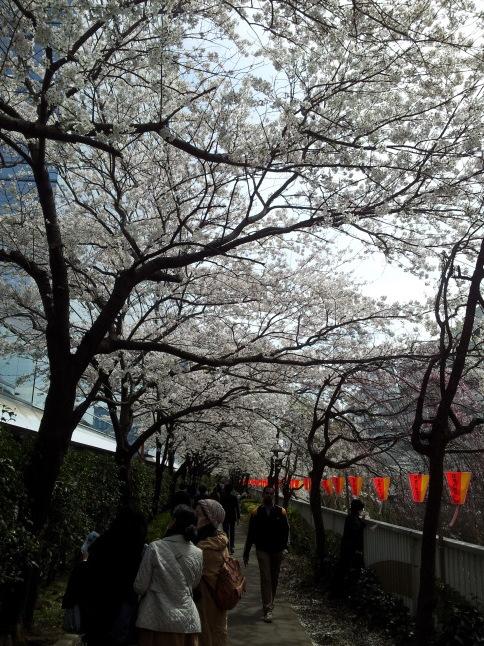 2012/3【春のフォトグラフ】花が咲いたら日記~目黒古桜と目黒川下流のソメイヨシノ_b0116271_15344293.jpg
