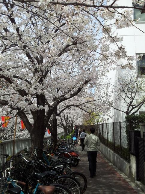 2012/3【春のフォトグラフ】花が咲いたら日記~目黒古桜と目黒川下流のソメイヨシノ_b0116271_15344434.jpg