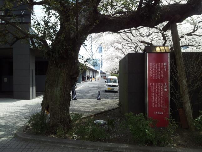 2012/3【春のフォトグラフ】花が咲いたら日記~目黒古桜と目黒川下流のソメイヨシノ_b0116271_15344570.jpg