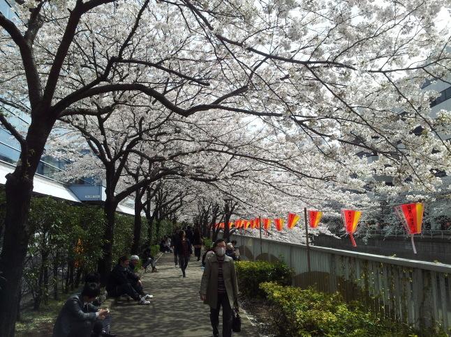 2012/3【春のフォトグラフ】花が咲いたら日記~目黒古桜と目黒川下流のソメイヨシノ_b0116271_15352010.jpg