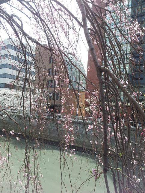2012/3【春のフォトグラフ】花が咲いたら日記~目黒古桜と目黒川下流のソメイヨシノ_b0116271_15352215.jpg