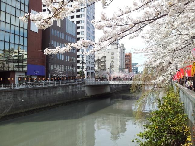 2012/3【春のフォトグラフ】花が咲いたら日記~目黒古桜と目黒川下流のソメイヨシノ_b0116271_15365634.jpg
