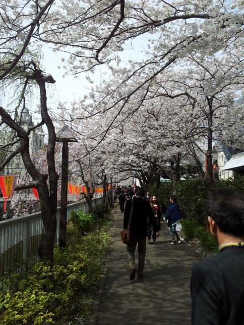 2012/3【春のフォトグラフ】花が咲いたら日記~目黒古桜と目黒川下流のソメイヨシノ_b0116271_15365712.jpg