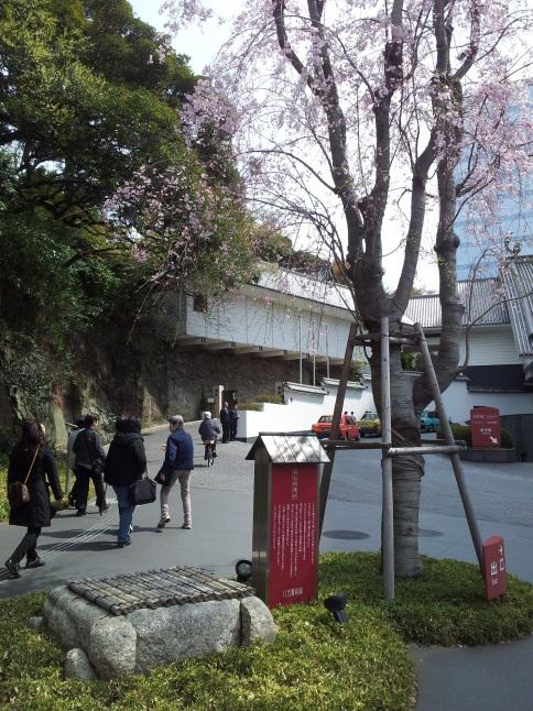 2012/3【春のフォトグラフ】花が咲いたら日記~目黒古桜と目黒川下流のソメイヨシノ_b0116271_15373930.jpg