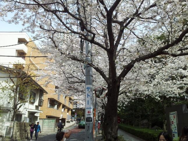 2012/3【春のフォトグラフ】花が咲いたら日記~目黒古桜と目黒川下流のソメイヨシノ_b0116271_15374054.jpg