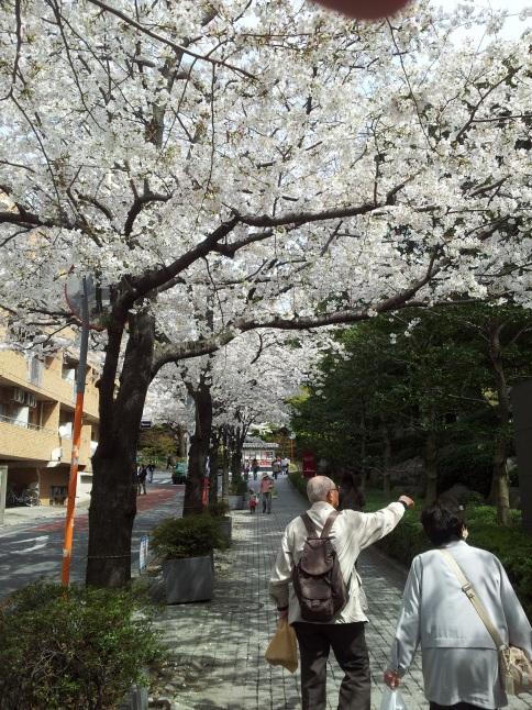 2012/3【春のフォトグラフ】花が咲いたら日記~目黒古桜と目黒川下流のソメイヨシノ_b0116271_15374167.jpg
