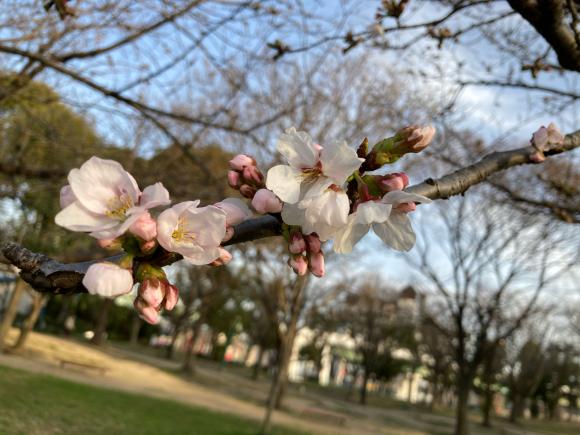 八幡屋公園の花達_a0098418_23120873.jpg