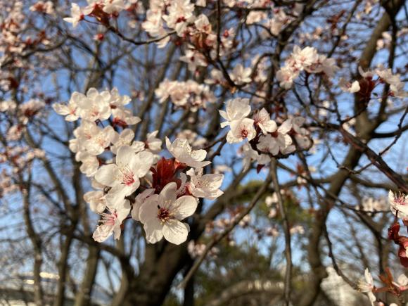 八幡屋公園の花達_a0098418_23121573.jpg