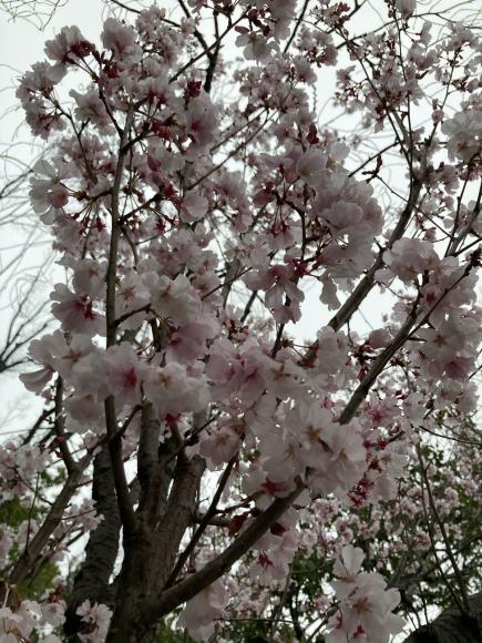 八幡屋公園の花達_a0098418_23145394.jpg