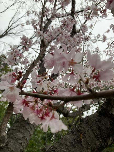 八幡屋公園の花達_a0098418_23145712.jpg