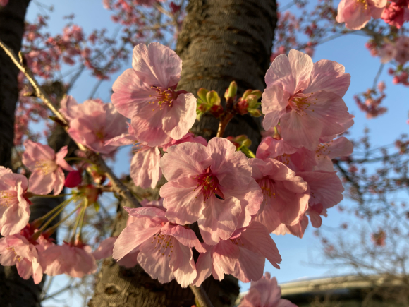 八幡屋公園の花達_a0098418_23150423.jpg