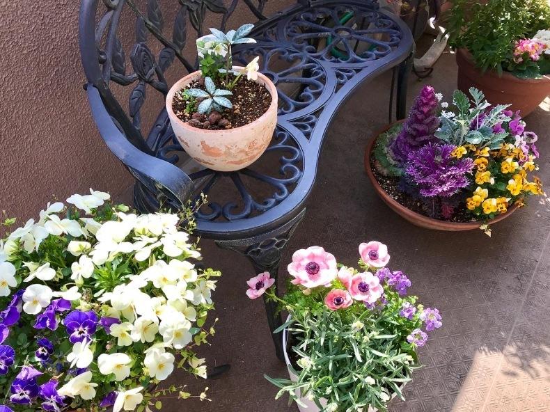 春の庭 目覚めの季節_d0085018_08060596.jpeg