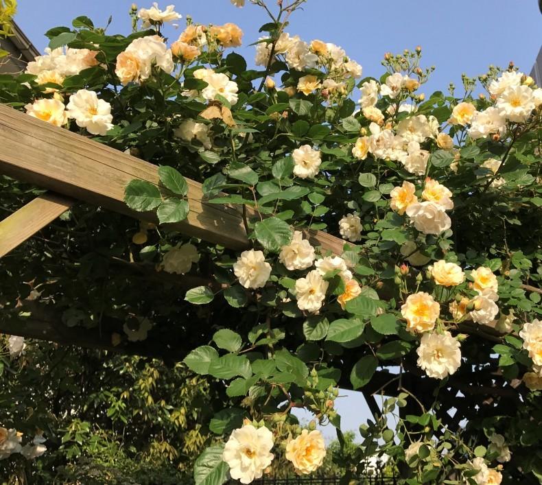 春の庭 目覚めの季節_d0085018_09485686.jpg