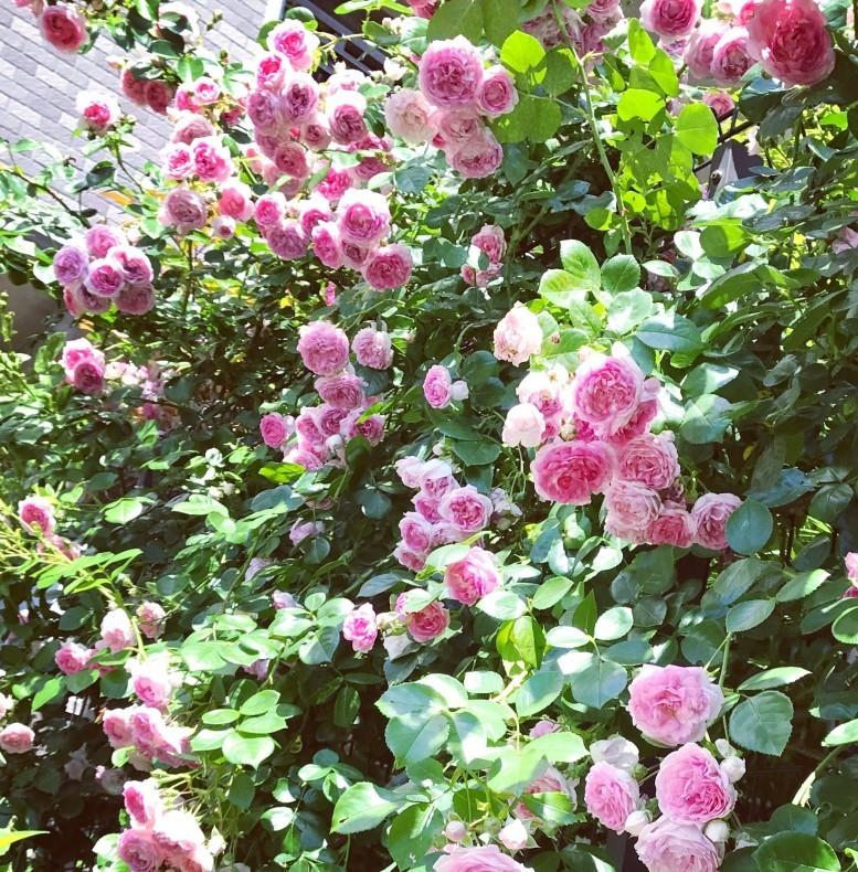 春の庭 目覚めの季節_d0085018_09491995.jpg
