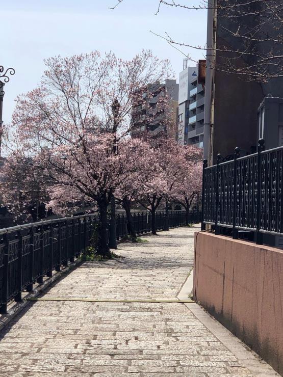 春ですね_c0170233_12020836.jpg