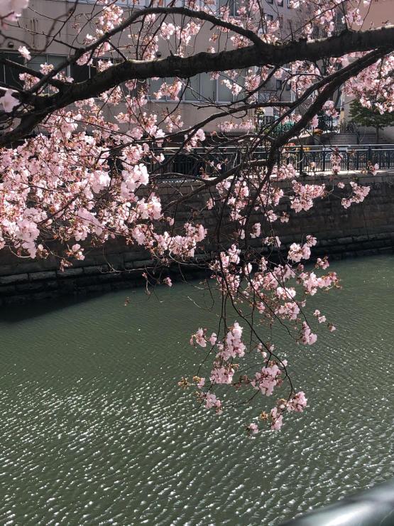 春ですね_c0170233_12021122.jpg