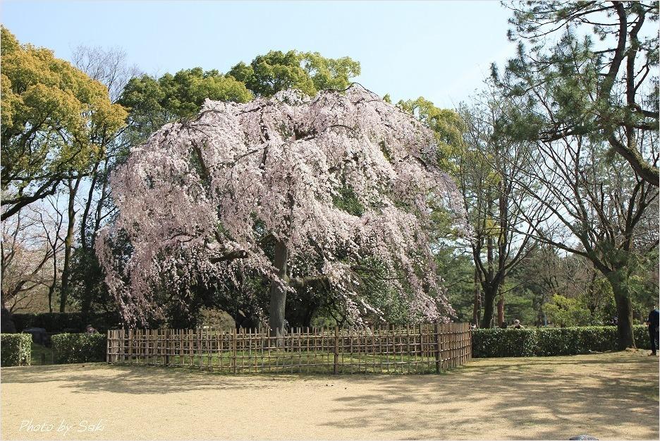 春の日の夢。_b0311208_17191073.jpg